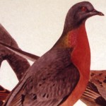 Passenger Pigeon;Richard Lake;1969